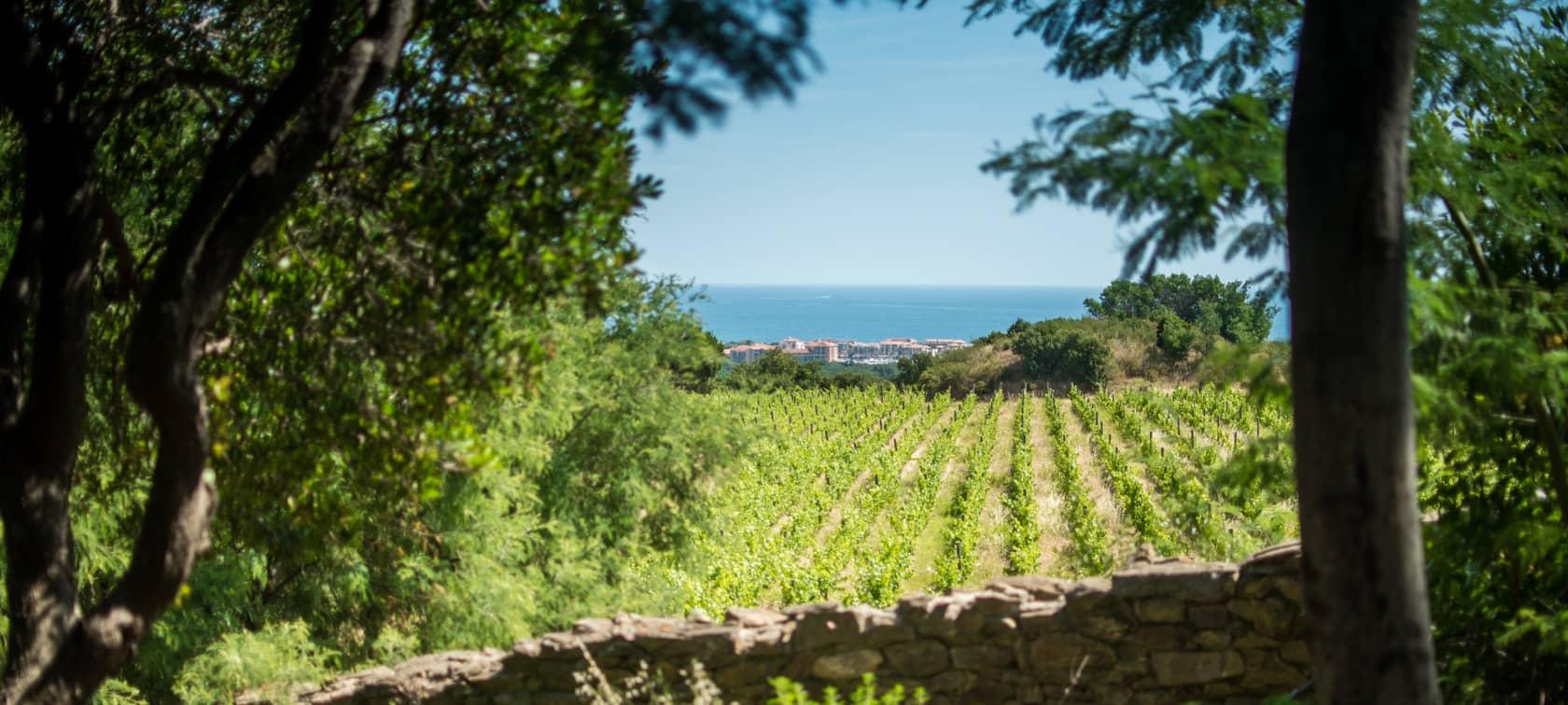 Argelès-sur-Mer vue depuis le vignoble du Château de Valmy, photo de Stéphane Ferrer