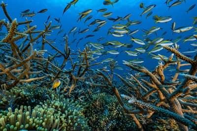 Récifs coralliens, photo d'Alexis Rosenfeld