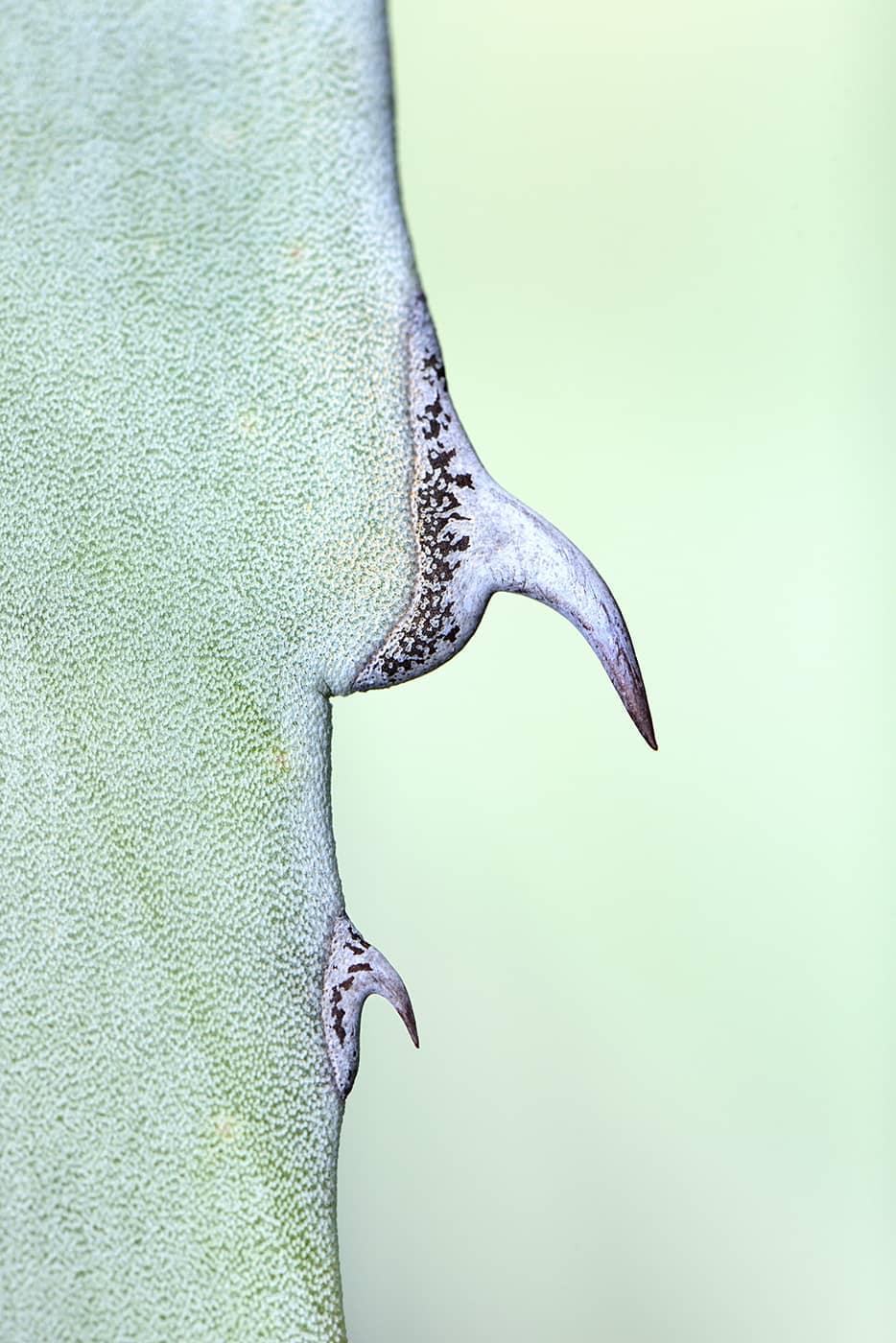 """Agave Plant 1"", photo de Javier Herranz Casellas"