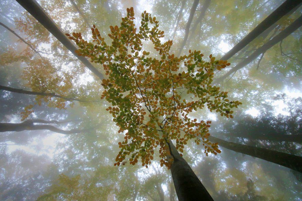 """""""Branch"""", photo de Marjan Artnak"""