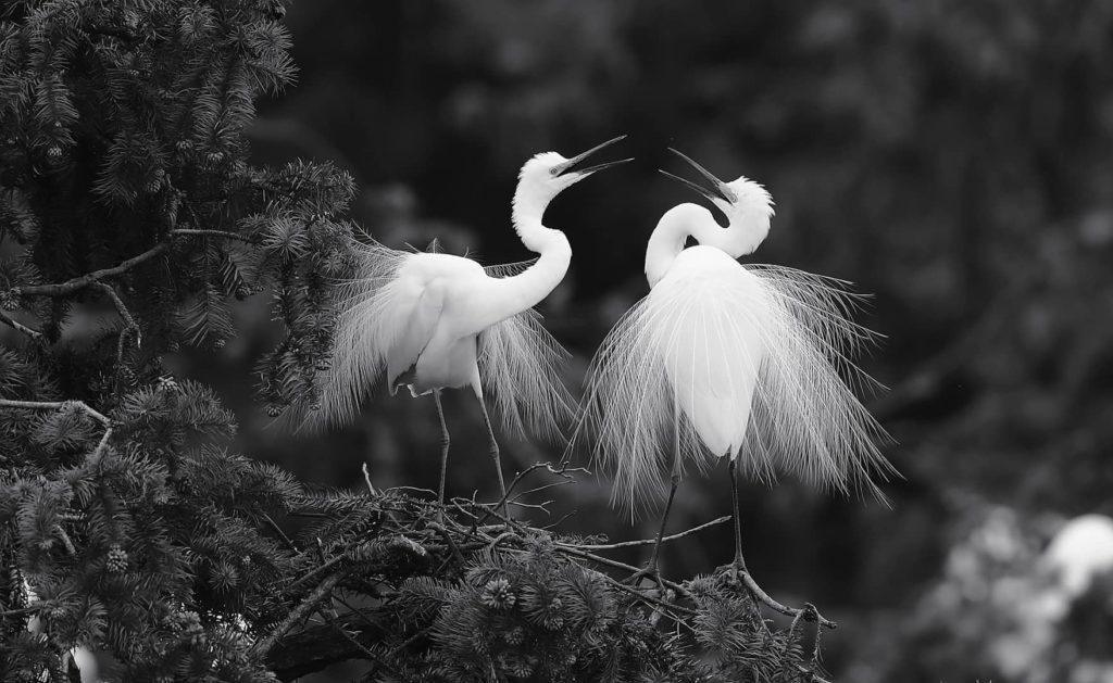 """""""Confiding Love"""", photo de Shaohua Fang"""