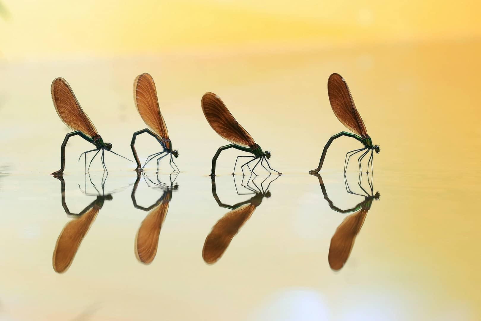 """""""Four in a Row"""", photo de Marjan ARTNAK"""