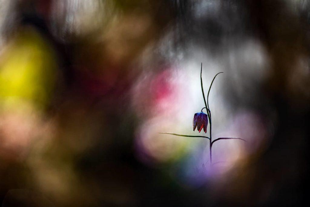 """""""Lady's Color"""", photo d'Emmanuel Grandepice"""
