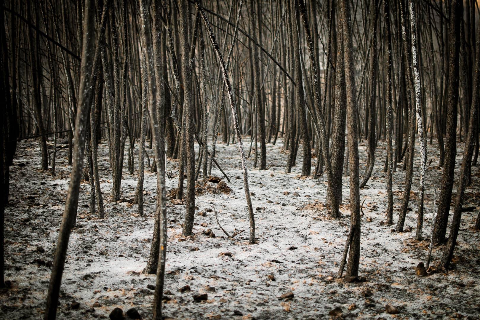 """""""Los Caminos de Dante"""", série de 5 photos d'Alberto Navarro Cantavella"""