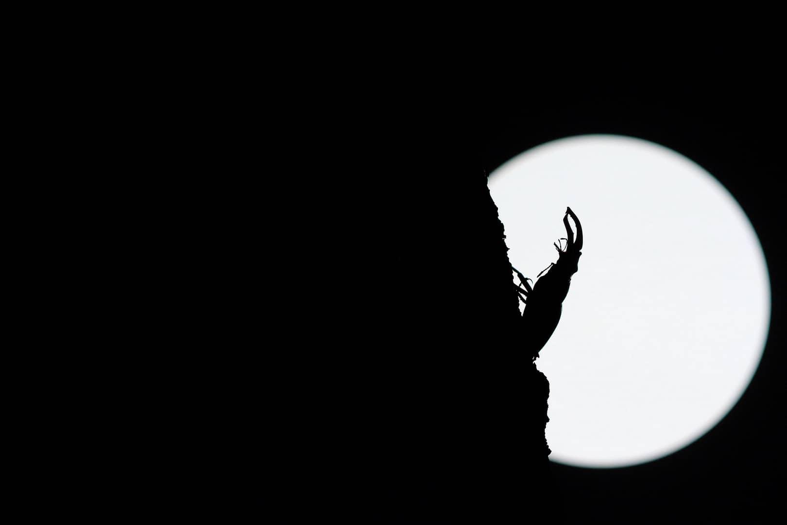 """Moonlight"", photo de Marjan ARTNAK"