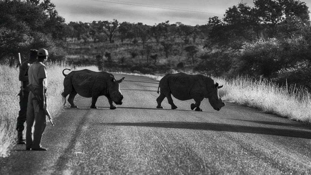 """Rhino Crossing"", photo d'Anne-Marie Etienne"