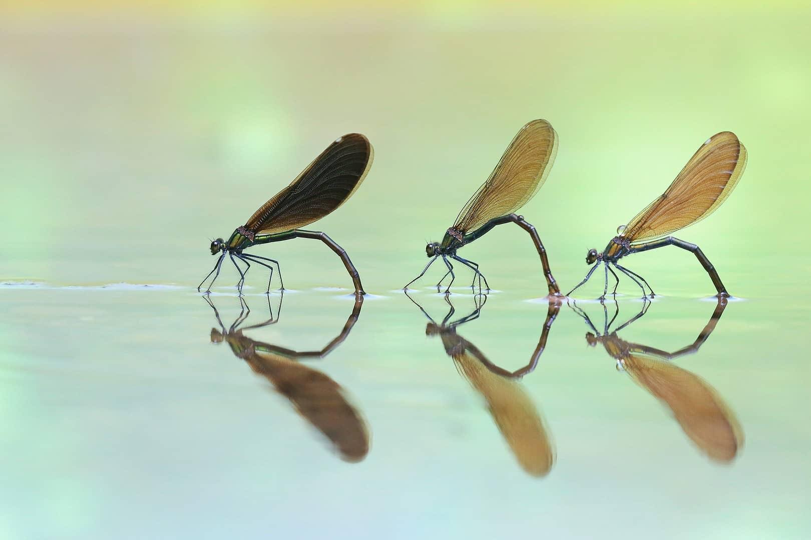 """Three in a Row"", photo de Marjan ARTNAK"