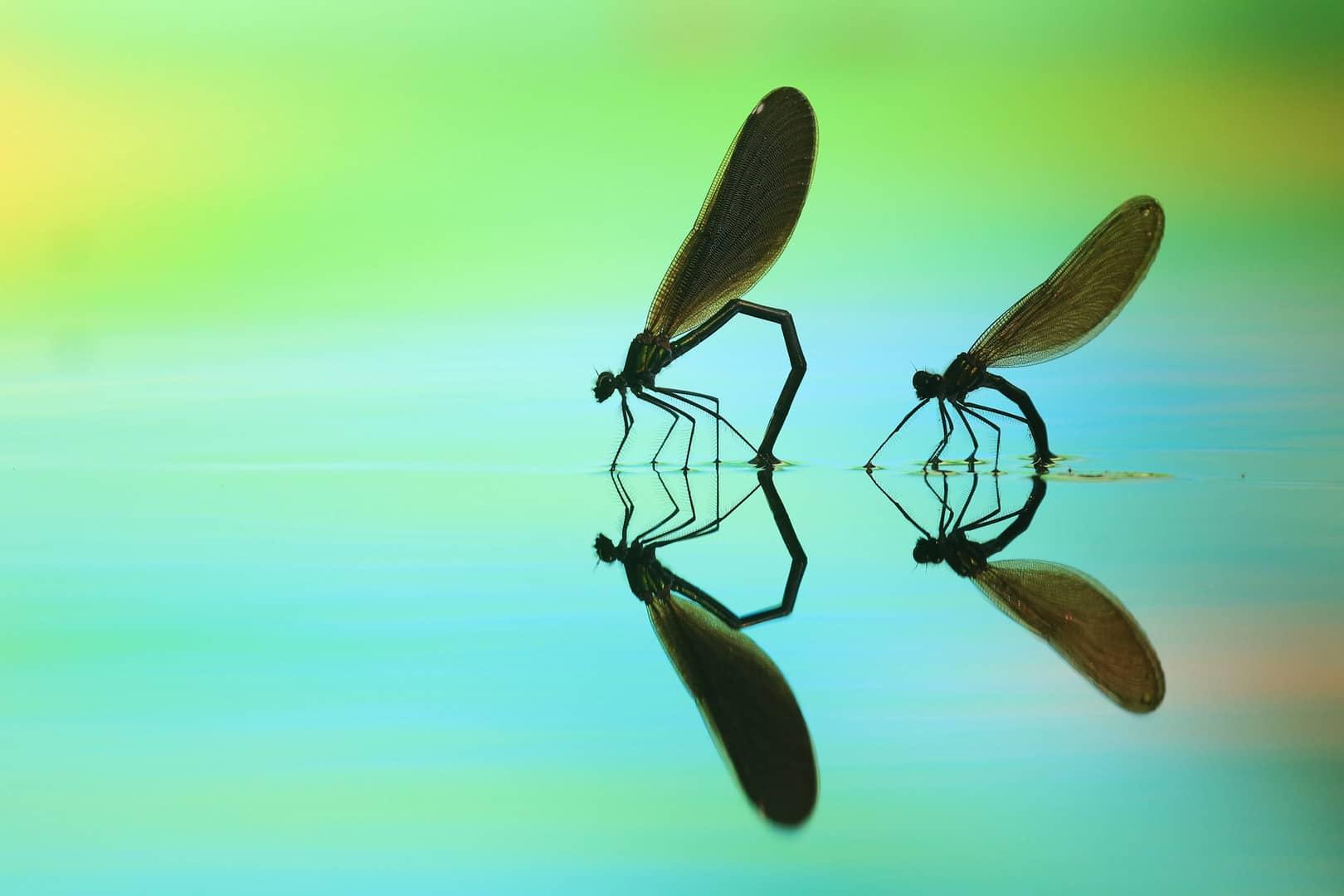 """""""Two in a Row"""", photo de Marjan ARTNAK"""