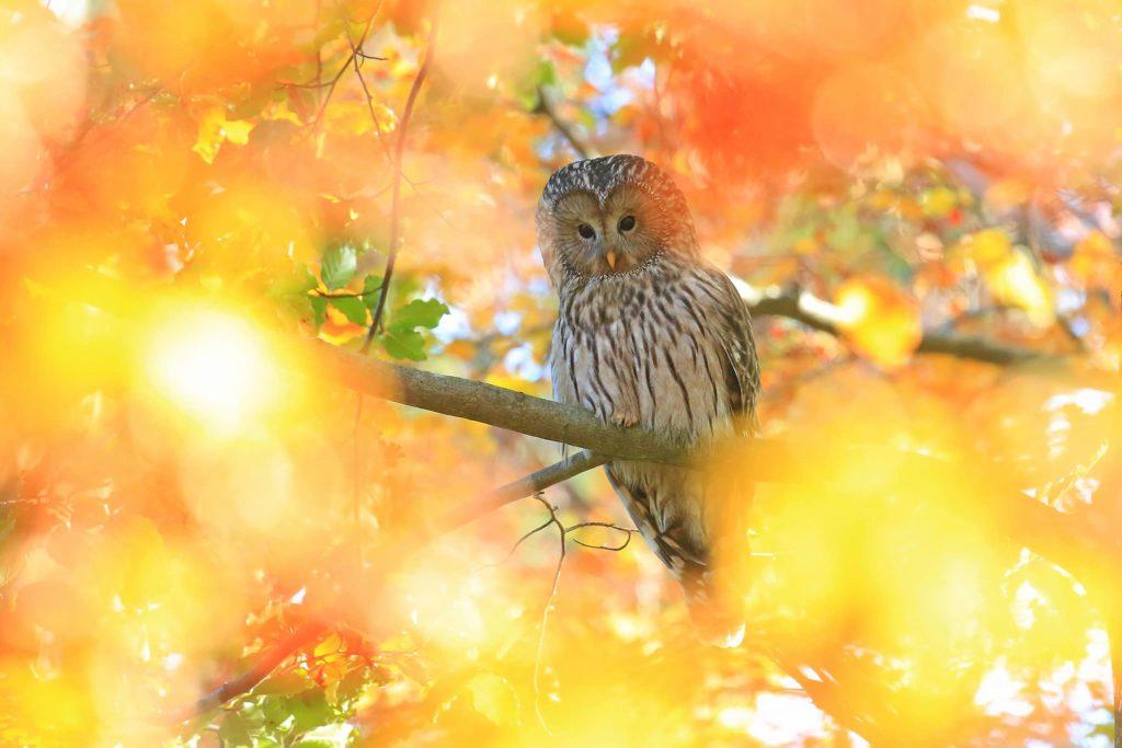 """""""Warm Autumn"""", photo d'Arjan Artnak"""