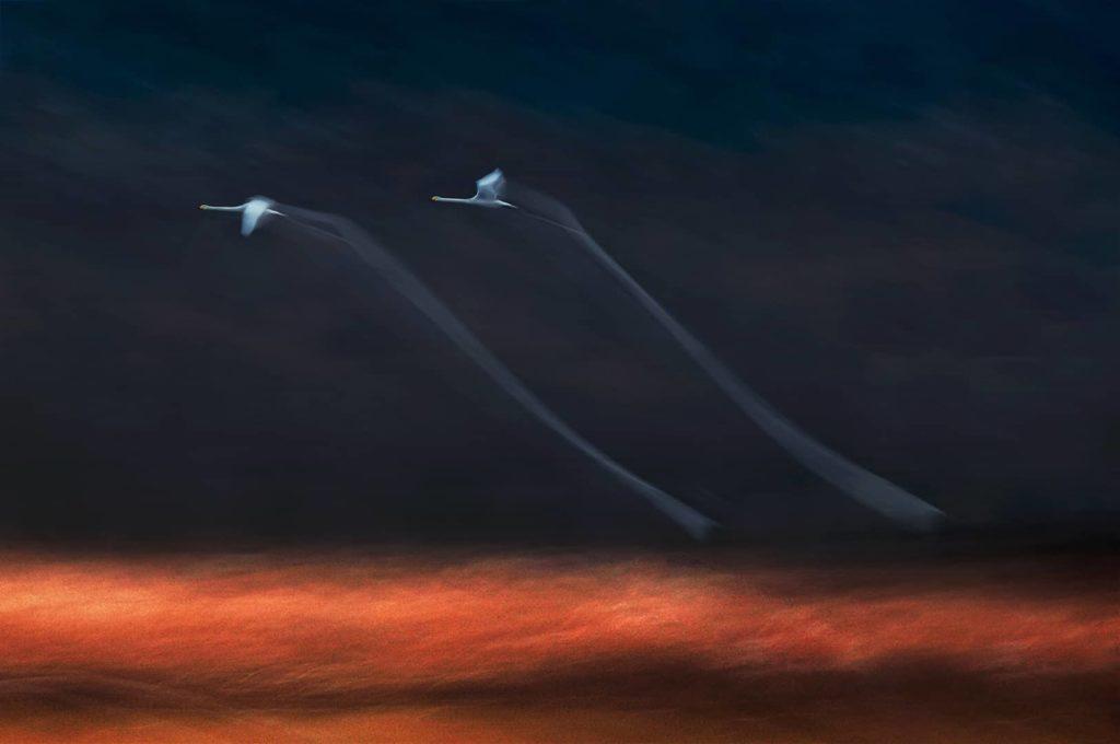 """""""Wing to Wing"""", photo de Taichang Li"""