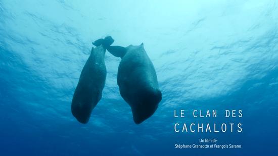 LE CLAN DES CACHALOTS, réalisé par Stéphane Granzotto & François Sarano